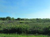 in the marshy area of the delta