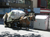 horse carts serve in informal recycling