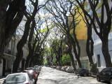 in the Palermo Soho neighborhood
