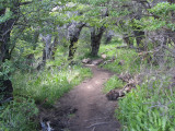 a surprising small wooded section at the saddle