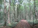 here's the Bois de Consenvoye, one of three named battles