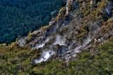 Steaming soils amongst prostrate kanuka