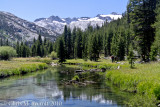 Reflections.  Upper end of meadows, Lyell Canyon