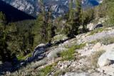 Trackside sagebrush shrubland vegetation - the next few photos show some of the plants present