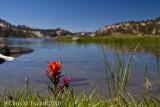 Lake edge flowers, Virginia Lake