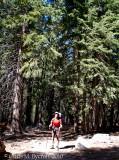 Roy, white fir forest