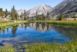 Sedges, reflections, Arrowhead Lake