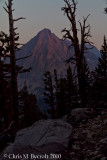 Sunset through foxtail pines over East Vidette