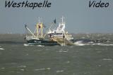 Westkapelle - Fishingboat - Gulls