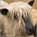 Hairdos look-alikes