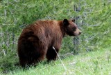 Springtime Wildlife in Yellowstone and Grand Tetons National Parks