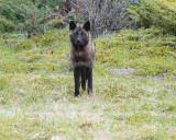 Jasper NP,Alberta hunter