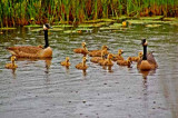 all in the family...Michigan's Seney NWR
