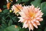 Ft. Bragg Flowers