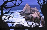 Pt Lobos...Monterey Bay,CA