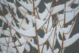 Winter Early Snow.jpg