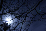 Winter Moon.jpg