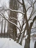 Winter Park.jpg