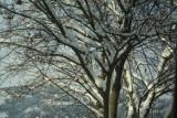 Tree Leons.jpg