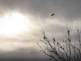 Winter Flying High.jpg