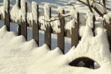 Winter Sinking in Snow.jpg