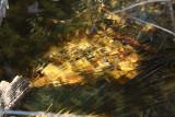 Frozen Pond6.jpg