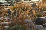River Bank Grasses3.jpg