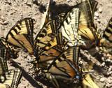 Butterfly Wings2.jpg