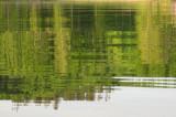 Summer reflections.jpg