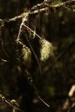 Forest Lichen.jpg