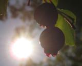 Summer Harvest2.jpg