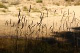River Grasses.jpg