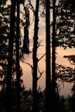 Evening Trees.jpg