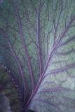 Leaf Patterns.jpg