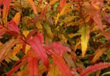 Fall abstract.jpg