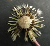 Dandelion Seeds3.jpg
