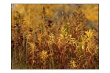 Autumn Colours2.jpg
