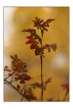 Autumn Rose2.jpg