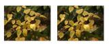 3D Leaves.jpg
