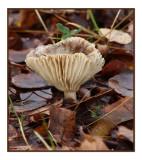 Fall Mushroom.jpg