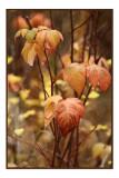 Autumn Leaves2.jpg