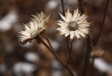 Dried Flower2.jpg
