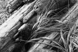 Grass  Driftwood.jpg