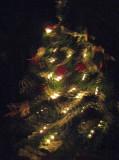 Reflective Tree.jpg