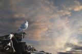 Seagull at sunset.jpg