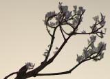 Frost flowers3.jpg