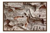 Wood worm condos.jpg