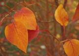 Autumn Leaves6_12.jpg