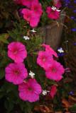 Flowers in OCTOBER2.jpg