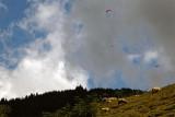 Vol au dessus d'un troupeau de moutons